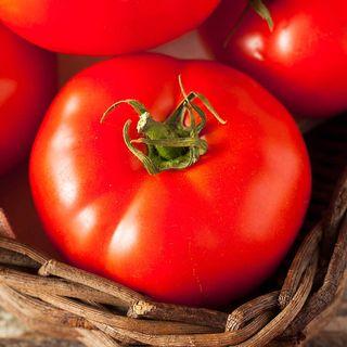 Fireworks Organic Tomato Seeds Image