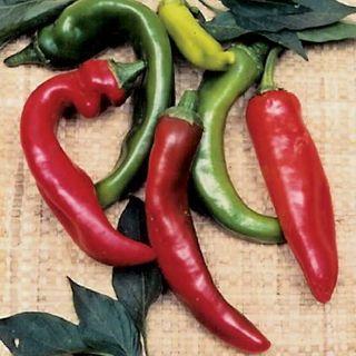 Anaheim Organic Pepper Seeds