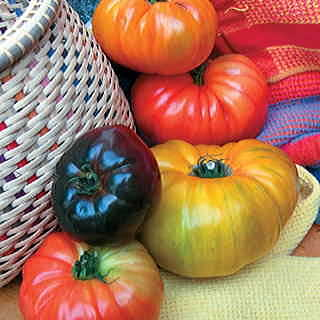 Rainbow Blend Heirloom Tomato Seeds