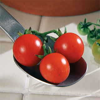 Red Currant Tomato Seeds