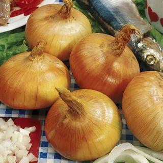 Walla Walla Sweet Onion Plants