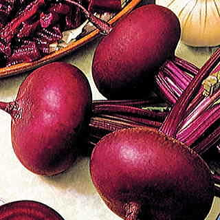 Egyptian Flat TF 68 Beet Seeds