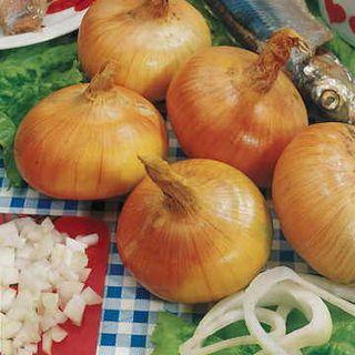 Walla Walla Sweet Onion Seeds