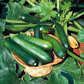 Black Beauty Organic Zucchini