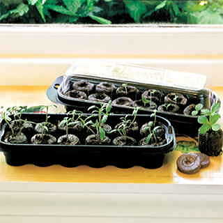 Jiffy Regular Windowsill Greenhouse