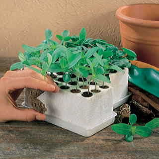 Park Starts Germination Kit
