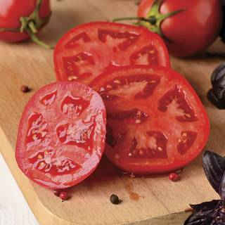 Better Bush Improved Hybrid Tomato Plants (pack of 3)