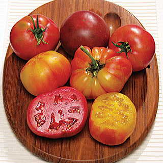 Rainbow Blend Heirloom Tomato Plant