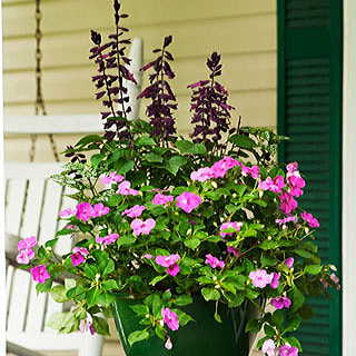 Front Porch Special Combination Annual Plants