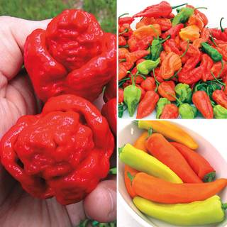 Super Hot Pepper Assortment (pack of 3)