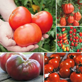 The Complete Tomato Collection