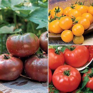 Tomato Sampler Collection