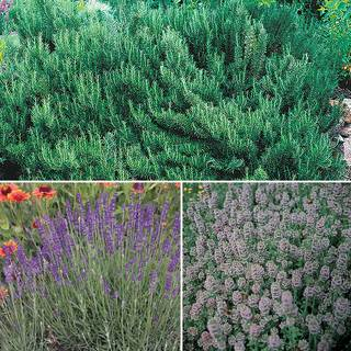Fragrant Herbs Collection