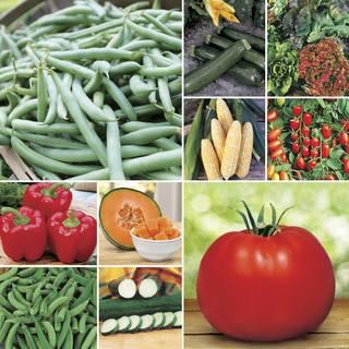 Customer Favorites Vegetable Collection Seeds