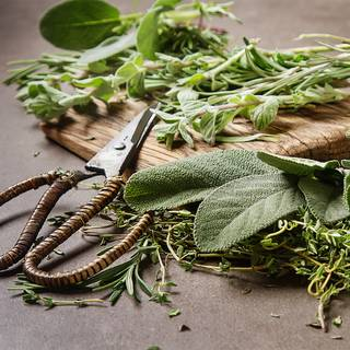 Italian Herb Seeds Collection