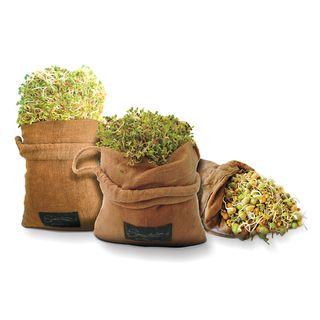 Raw Hemp Sprouting Bag