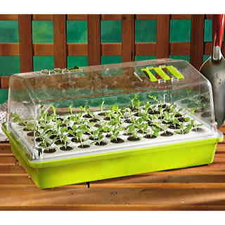 Anniversary Edition Parks Original Bio Dome 60 Cell Seed Starter Collection - Lime