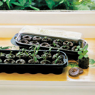 Jiffy-7 Windowsill Greenhouse and Refills