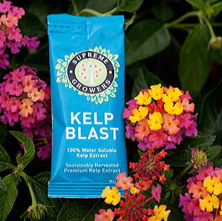 Kelp Blast Natural Superfood