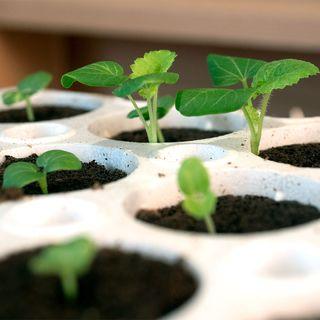 Park's Original Bio Dome Seed-Starting System Image