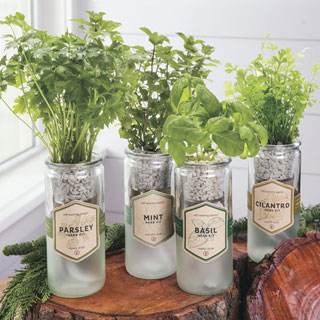 Eco-Planter Organic Herb Kit
