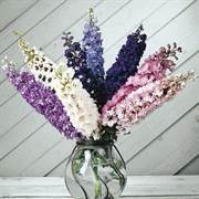 Magic Fountain Mix Delphinium Seeds image