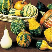 Gourd Complete Large & Small Mix Seeds image
