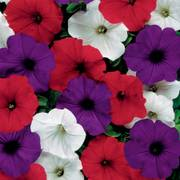 Petunia Easy Wave The Flag Mixture (Improve)