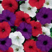 Easy Wave® The Flag Mix (Improve) Petunia Seeds image