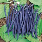 Dwarf Velour French Bean Seeds (P)Pkt of 150 seeds image
