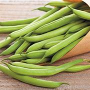 Blue Lake FM-1 Bean Seeds