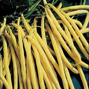 Rocdor Bush Bean Seeds (P) Pkt of 100 seeds image