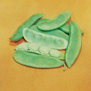 Fordhook 242 Lima Bean Seeds (L)1lb image