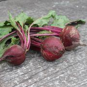 Detroit Dark Red Beet Seeds Alternate Image 2
