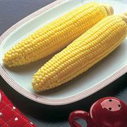 Bodacious Hybrid Corn Seeds (L)1lb image