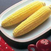 Bodacious Hybrid Corn Seeds (N)1/2lb image