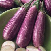 Fairy Tale Hybrid Eggplant Seeds Alternate Image 1