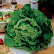 Buttercrunch Lettuce Seeds image