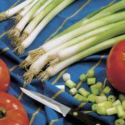 Parade Green Onion Seeds Alternate Image 1