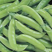 Super Sugar Snap Pea Seeds (P) Pkt of 160 seeds image