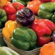 Sweet Rainbow Mix Pepper Seeds Pack of 100 image