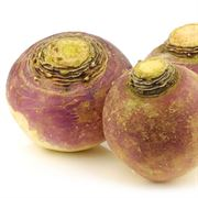 American Purple Top Rutabaga Seeds image