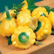 Sunburst Hybrid Squash Seeds