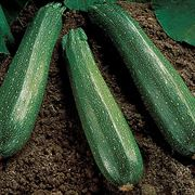 Spineless Beauty Hybrid Squash Seeds image
