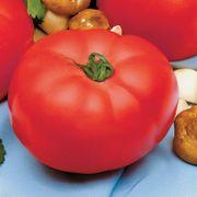 Beefmaster Hybrid Tomato Seeds (P)Pkt of 30 seeds image