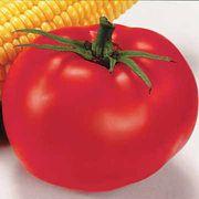 Better Boy Hybrid Tomato Seeds