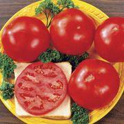 Celebrity Hybrid Tomato Seeds (P)Pkt of 30 seeds Alternate Image 1