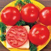 Celebrity Hybrid Tomato Seeds