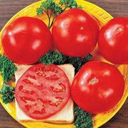 Celebrity Hybrid Tomato Seeds Pack of 250 image