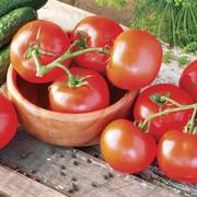 Celebrity Hybrid Tomato Seeds (P) Pkt of 30 seeds image